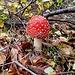 ... questi sono i funghi che mi piace vedere nei boschi !