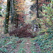 auf dem Wanderweg zur Combe du Vivier, hier mit Hindernissen