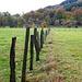 Rur meadows