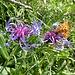 ... und geflügeltem Besucher auf filigraner Blume