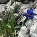 Blumenreigen zum Abschluss 4 - sehr langstieliges Exemplar