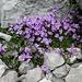 Blumenreigen zum Abschluss 3