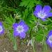 Blumenreigen zum Abschluss 8