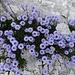 Blumenreigen zum Abschluss 5