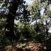 """Unterwegs in den Vatikanischen Gärten (Giardini Vaticani) - Blick zum vermeintlichen """"natürlichen Gipfel"""" aus etwa östlicher Richtung. Momentan wächst dort etliches Grün."""