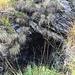 Assaggio minerario nei pressi dell'alpe Auliga
