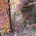 Der Abstieg über den alten Berpfad ist durchweg steil und zum Teil auch ruppig. Oberhalb der Bützelhütte ist bei Nässe große Vorsicht angebracht