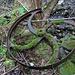 Vogelgesang, Treibrad/Riemenscheibe eines landwirtschaftlichen Gerätes