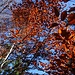 Herbstfarben beim Abstieg