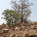 Hinter dem Baobab...