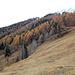 A Tracouéjé : l'ancienne mine de nickel-chrome se cache quelque part dans cette forêt.