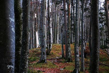 Die Landschaft der Hinteri Egg ist ein Naturschutzgebiet. Zurecht und eindrücklich, wenn man durch den Jurabergwald aus Nordwesten her dem Gipfel entgegen wandert.