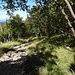 Ein lauschiger Steig führt von Podgorje durch Niederwald bergwärts