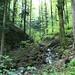 prächtige Waldlandschaften