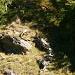 Gemsen unterhalb der Alp de Calvaresc