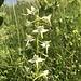 gediegene Blütenpracht 7
