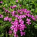 gediegene Blütenpracht 1