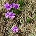 gediegene Blütenpracht 3  (diese hier sind noch fest verwurzelt)