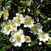gediegene Blütenpracht 4