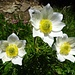 gediegene Blütenpracht 6