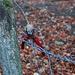 Wer etwas alpiner und wegglos im Jura unterwegs ist, braucht meistens keine Steigeisen oder Pickel, dafür das richte Werkzeug um die fürchterlichen Stacheldrahtzäune zu durchtrennen. Auf dieser Wanderung musste ganze 9 (!) Zäune entfernen um ohne Verletzung oder Risse in Kleidern einzufangen !