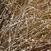 Das trockene Gras ist sehr frostig.<br />