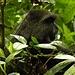 ein Affe machts sich im Baum gemütlich