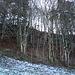 Abstieg von der Rochuskapelle und es liegen noch Schneereste