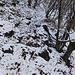 Dopodichè la traccia svanisce ... oppure rimane nascosta tra le foglie, la neve, il fango ...<br />In questo tratto bisogna passare al di sopra dell'albero caduto ... non semplice rimanere in piedi con tutto il terreno fangoso/nevoso/foglioso ... :)