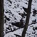 Le tracce di animali fanno pensare alla possibilità che ci sia un sentiero ... qui in effetti è così (si nota anche un segno rosso sull'albero) ma in altri momenti invece seguirle sarebbe stato fuorviante ... anche perchè a volte sono più di una.