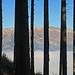 auf dem Wanderweg hinunter nach Ivelspus, Blick durch den Stangenwald hinüber zum Alpstein