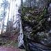 wie lange noch wird der Baum den Felsen trotzen?