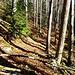 stetig aber ständig aufwärts durch den Wald