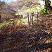 hier gibt es zwar einen Durchlass für den Wanderer, aber direkt dahinter versperren abgesägte Bäume den Weg. Was soll das?