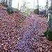 Aufstieg zum Vogelberg, es ist wieder nass