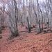 Sentiero Aga 550 mt - Pozzopiano 981 mt.