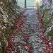 Die Römerstrasse Langenbruck befindet sich etwas oberhalb der heutigen Passtrasse an den unteren Westhängen der Chräiegg auf etw 750m.   Als Hauenstein wird dieser Felsdurchbruch an der Chräiegg bezeichnet, der dem Pass den Namen gab. Eine Strasse über den Hauenstein wird erstmals 1145 in einer Urkunde des Klosters Schöntal erwähnt. Die Anlage ist aber viel älter und diente bereits zur Römerzeit als Verbindung von Salodurum nach Augusta Raurica.
