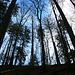Durch Wald, weglos und steil, stieg ich hinauf zum Dürstelgrat Westgrat. Den Grat erreichte ich auf zirka 925m und der steile, nordseitige Waldaufstieg war etwa 50 Höhenmeter lang.