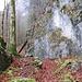 Felsen unter dem nassen Blätterteppich erfordern Trittsicherheit