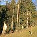 es hat in der Umgebung Gonten riesige Sturmschäden am Wald