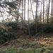 in diesem Waldstück würde der direkte Weg hinauf gehen