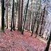 Markierungen an den Bäumen boten hier zwischen Wika und Kobel die notwendige Orientierung