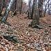 Il sentiero è abbastanza ripido, il fondo, piuttosto sconnesso, è ingombro di foglie di faggio che rendono malagevole il salire.