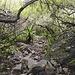 Charakter des Wegs unterhalb des Sattels im Abstieg.