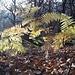 weiteres Herbstimpressiönchen