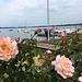 Rosenfenster Untersee
