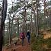 Auf dem Kittenberg ist die Trifelsblickhütte bereits ausgeschildert. Wir folgten der Beschilderung Richtung Nordwesten. Der Weg quert zunächst den Berghang.