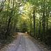 Anstieg durch lichten Wald
