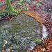 Wasseridylle mit Laub und Moos