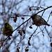 Notiamo un numeroso stormo di uccellini, che partono in gruppo e poi si fermano tutti sullo stesso albero